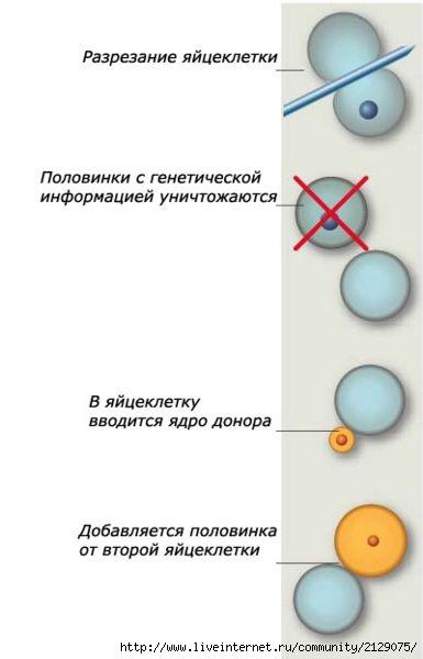 Схема «ручного клонирования».