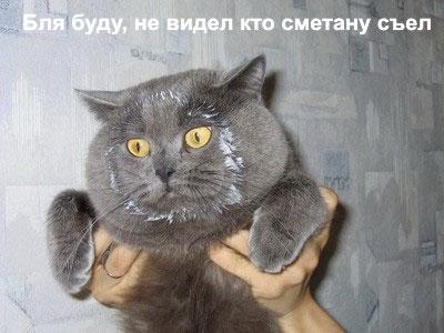 53047_prikolkoty_13 (400x300, 30Kb)