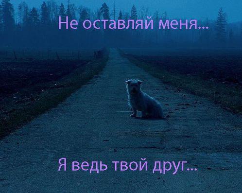 Я боюсь тебя потерять.... Обсуждение на LiveInternet - Российский ...