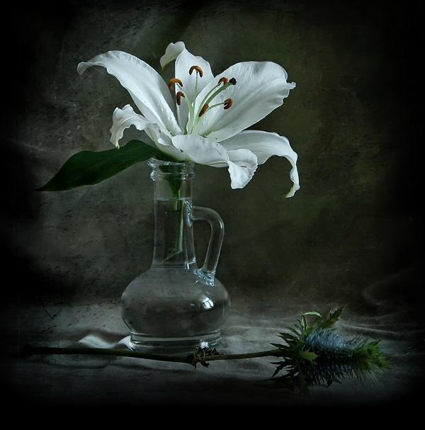 Цветы свиблово доставка