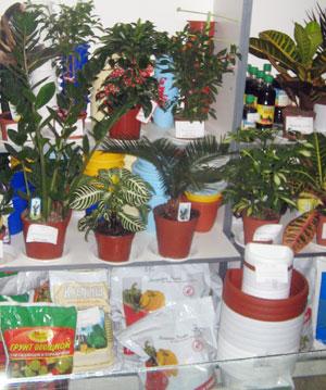 Вы купили растение - доставка цветов и букетов в Москве.
