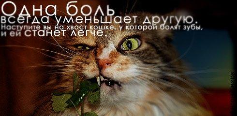 1205238989_1204557978_20_02_08 (490x240, 31Kb)