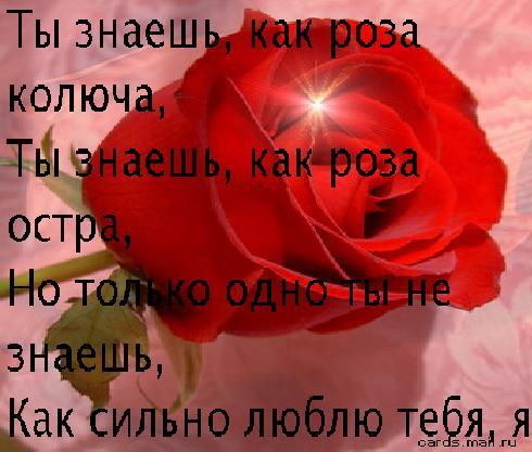 жизнь я тебя люблю любимая: