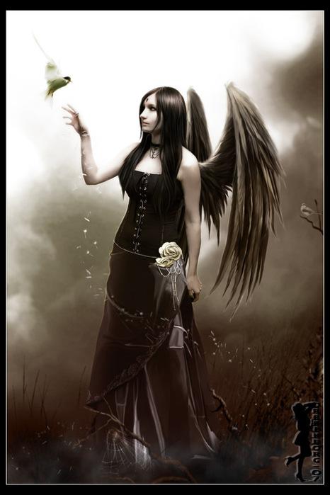 bird_of_grace_834 (466x699, 75Kb)