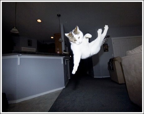 Летающие коты онлайн