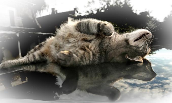 Фото кошек и котят фото приколы с