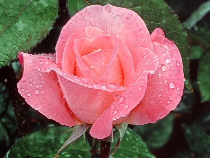 http://img0.liveinternet.ru/images/attach/b/3/22/298/22298121_flowerses_009.jpg