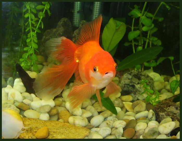 Мастер класс рыбки в аквариуме