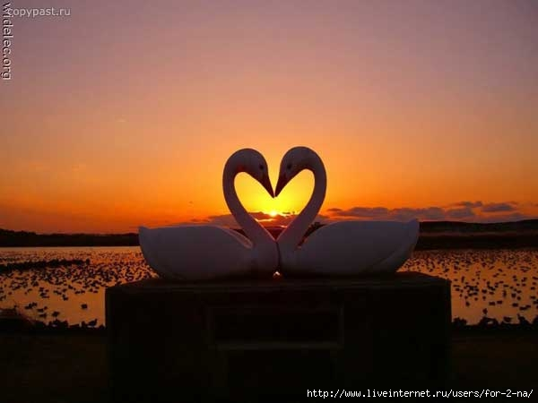 http://img0.liveinternet.ru/images/attach/b/3/22/628/22628544_1202843093_serce_15.jpg
