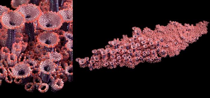 Много я видела в своей жизни украшений и изделий из бисера, но такое вижу первый раз.  Кораллы из бисера в...