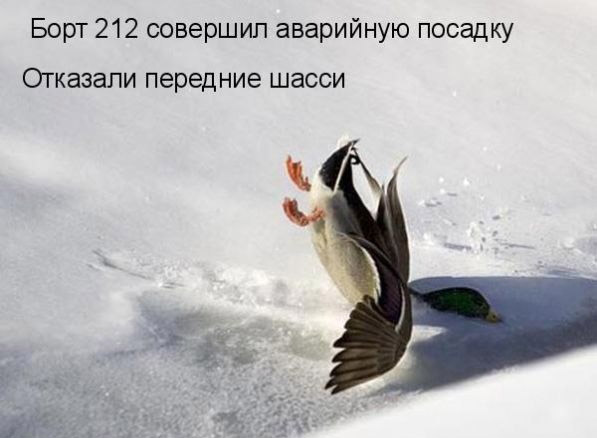 Прикольные картинки с животными (597x438, 41Kb)