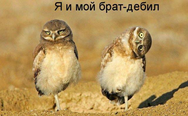 Прикольные картинки с животными (640x397, 65Kb)