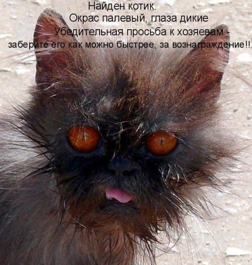 Прикольные картинки с животными (509x535, 77Kb)
