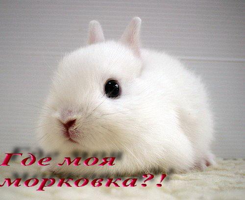 http://img0.liveinternet.ru/images/attach/b/3/22/957/22957516_morkovka.jpg