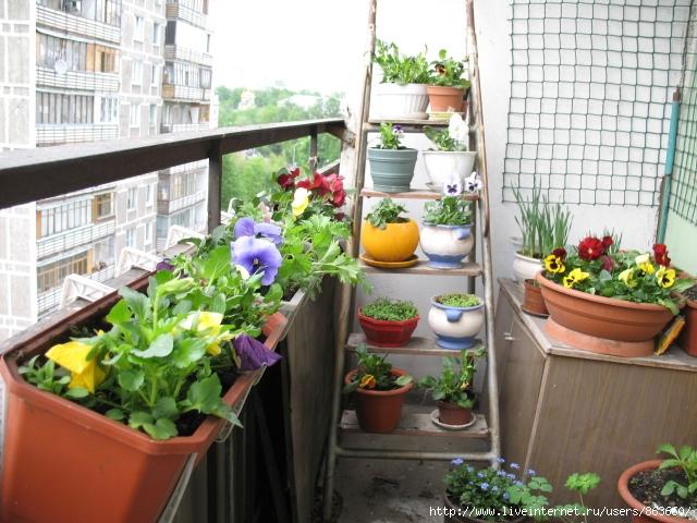 Цветущий балкон - домашний уют.