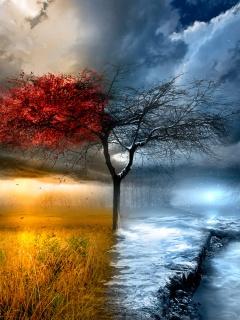 Autumn_Winter (240x320, 41Kb)