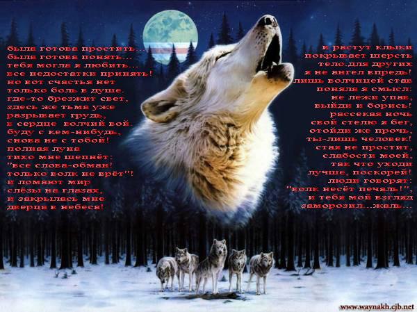 Песня волчицы 2 600x449 110kb