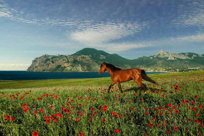 Обалденные фото Крыма)