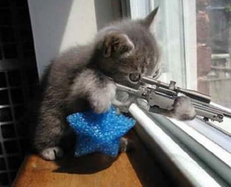 Смешные фото котов обсуждение на