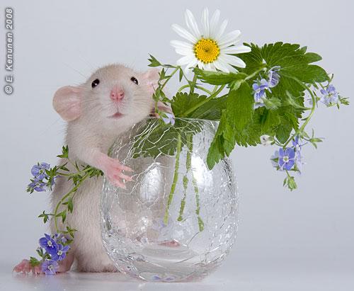 Открытка с днем рождения с мышами 81