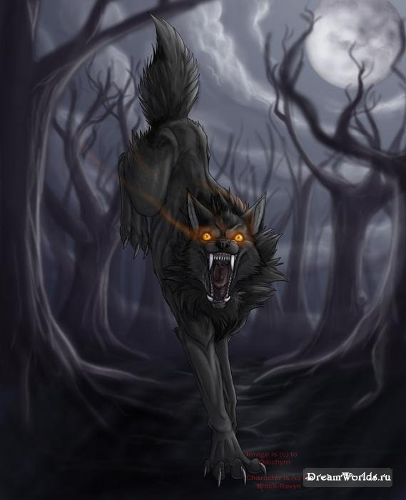 Мои любимые картинки волков