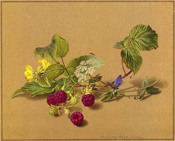 овощи и цветы рисунок карандашом