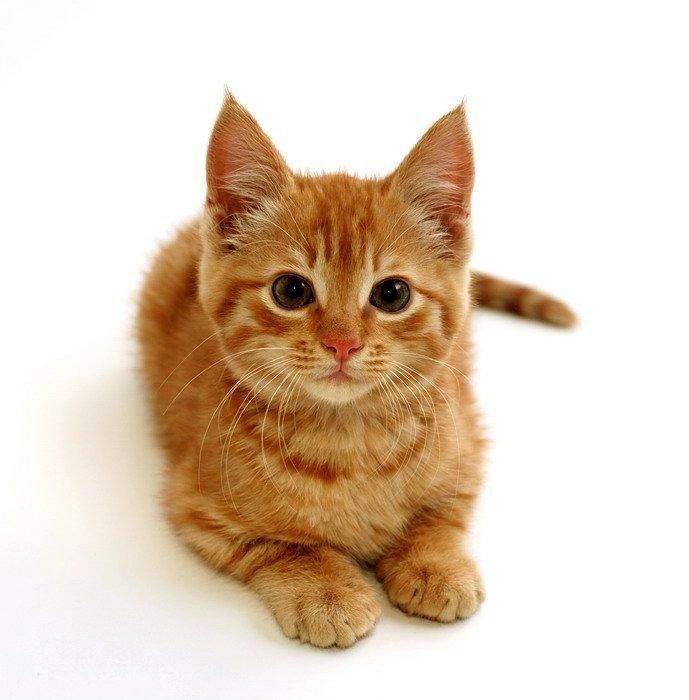 рыжий котёнок картинки