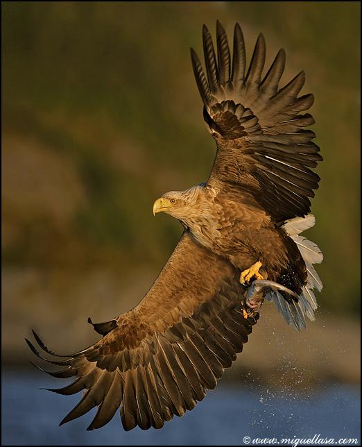 Mihas.Net Печать: Птицы в полете.  Страница 1.