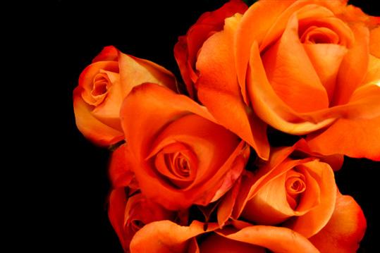 Оранжевый цветок фото