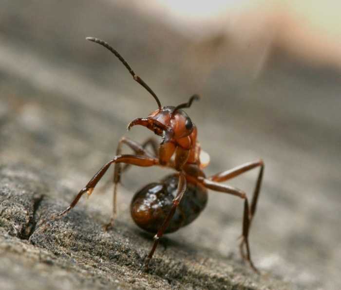 средство от муравьев в теплице
