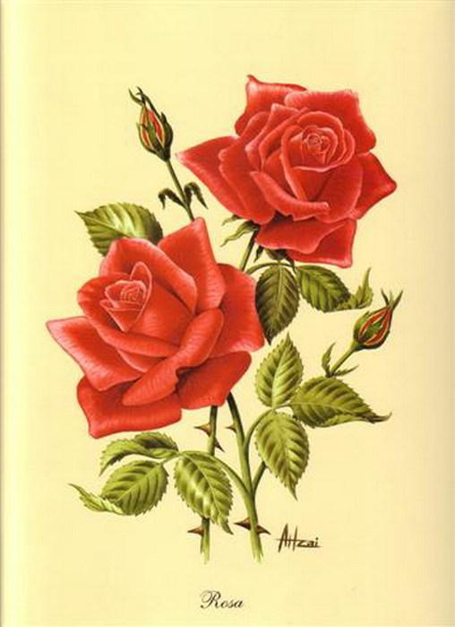 нарисованные красивые картинки цветов: