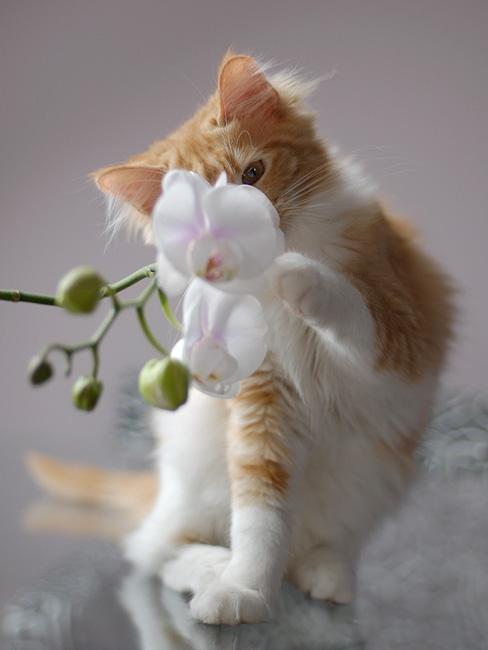 Котик - картинка на телефон 1092619