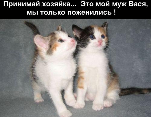 Отдам двух котят в добрые руки.