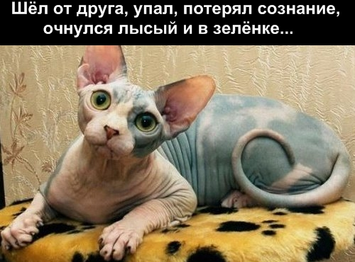 смешные фото кошек с надписями.
