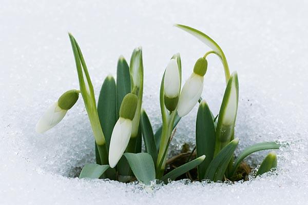 Описание: Была весна и цвели
