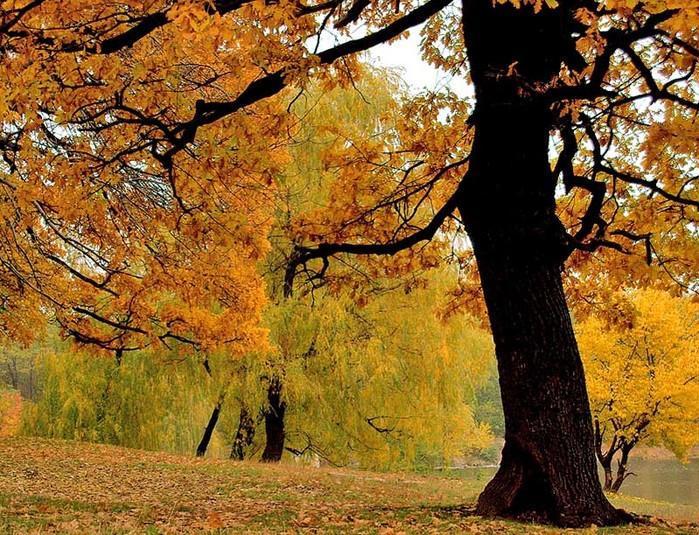 """Схема вышивки  """"Золотая осень """": таблица цветов."""