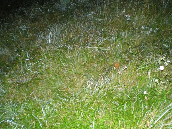 trava-murava (600x450, 175Kb)