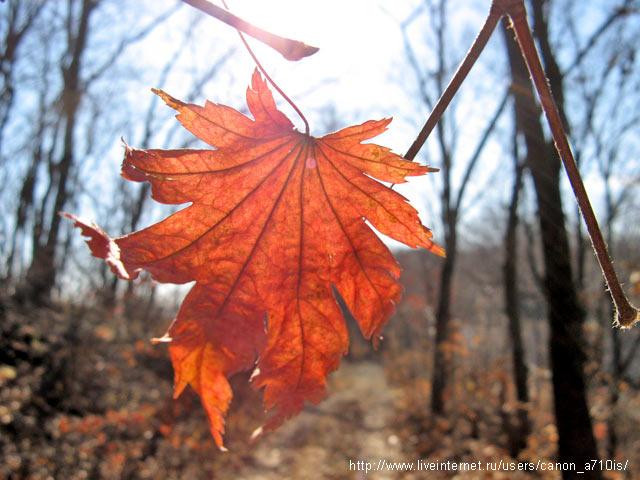песня лист осенний в караоке
