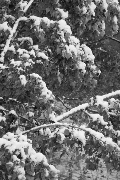 Дерево в снегу (400x600, 220Kb)