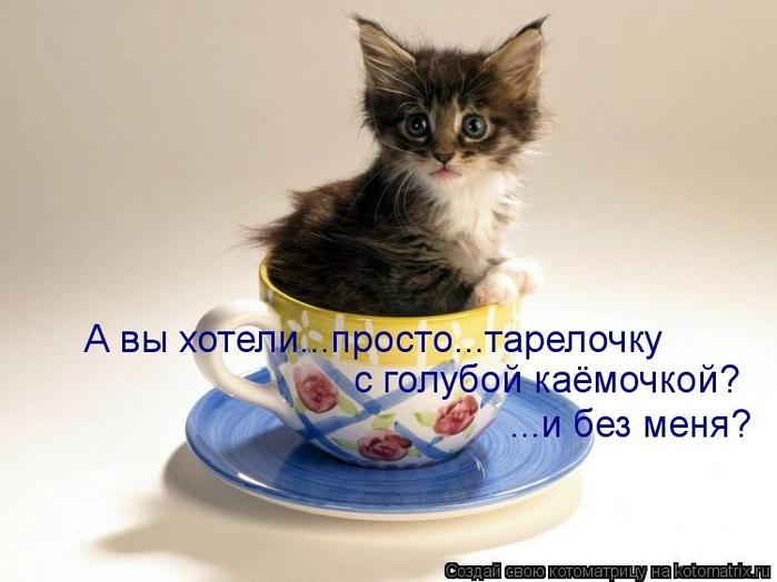 kotomatritsa_3H (700x524, 180Kb)