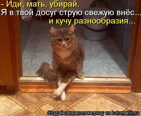 kotomatritsa_8 (483x399, 99Kb)