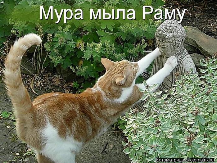 kotomatritsa_i (700x525, 348Kb)