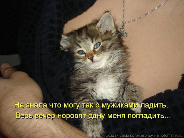 kotomatritsa_mY (700x524, 223Kb)