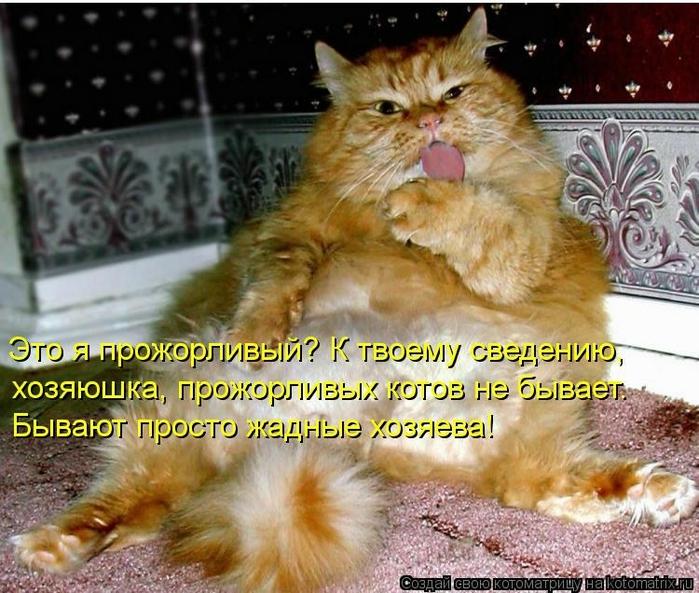 kotomatritsa_tT (700x593, 321Kb)