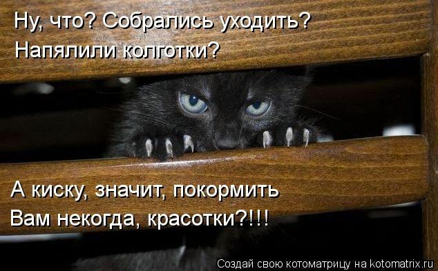 kotomatritsa_um (634x393, 142Kb)