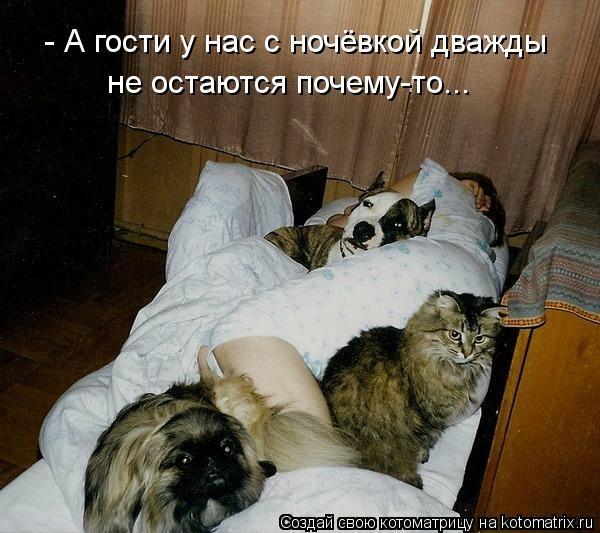 kotomatritsa_w8 (600x533, 158Kb)