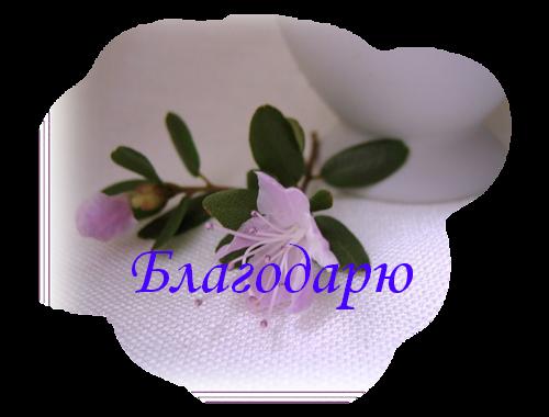 цветы (500x380, 345Kb)