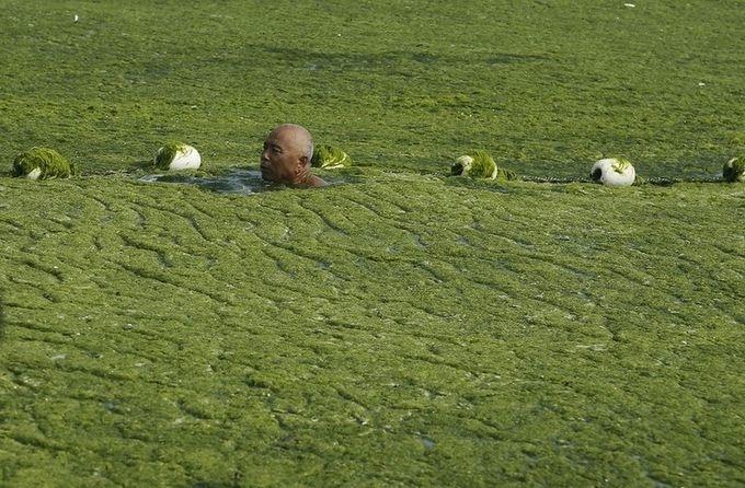 зеленые водоросли на пляже в китае фото 4 (680x446, 212Kb)