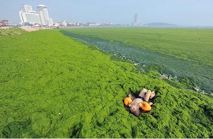 зеленые водоросли на пляже в китае фото 5 (680x444, 225Kb)