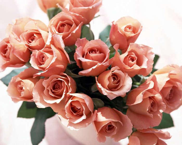 Rose _27_ (700x560, 53Kb)
